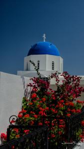 Santorini Flowers Johannes Frank