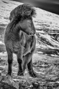 Horse winter Johannes Frank