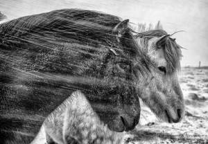 Horses in bad weather Johannes Frank
