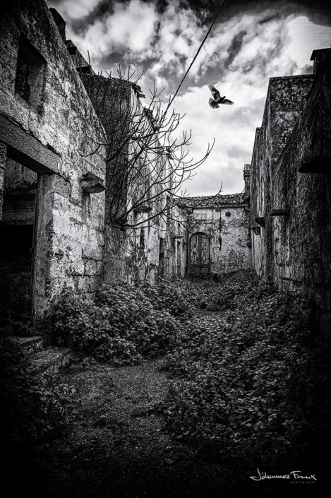 dove fly for a building in martinagano johannes frank