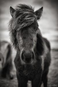 horse face winter johannesfrank