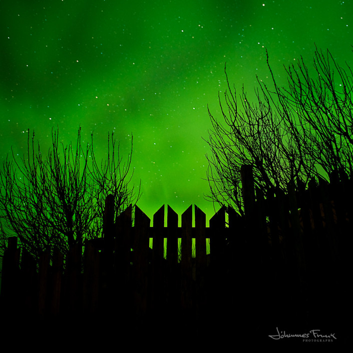 Northen lights shine behind a gate surounded with trees