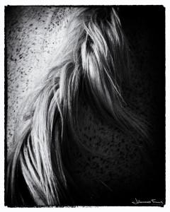 Horse Texture Johannes Frank