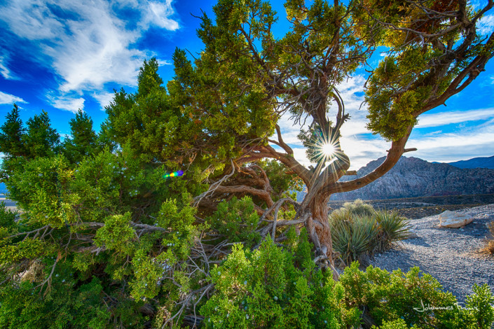 Travel Images Sun flare in the tree Johannes Frank