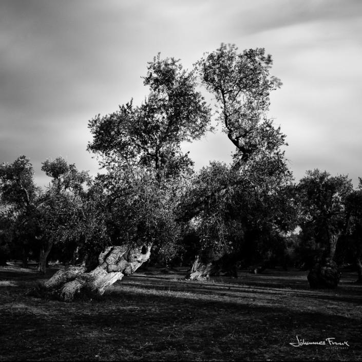 Tree in a shepa of a Grassshopper long exposure Johannes Frank