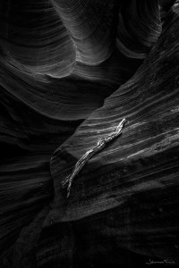 Black and white image of a log of tree left insite upper Antylope Canyon USA