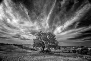 Lone Tree Johannes Frank