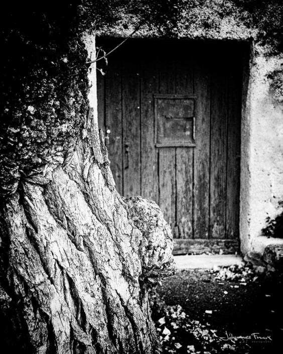 Tree and a Door Johannes Frankl