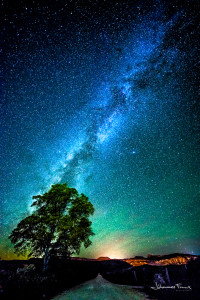 Travel Images Milky Way and tree Johannes Frank