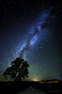 tree and milky way Utah USA