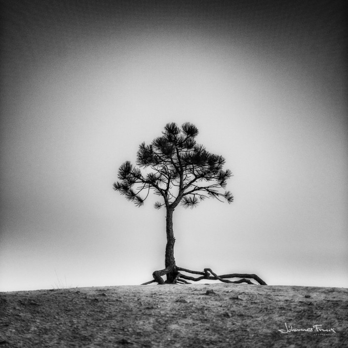 Tree Bryce Canyon Black and white Johannes Frank