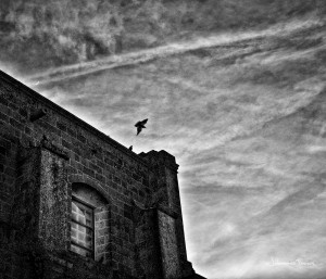 dove fly from a building in Martinagano johannes frank