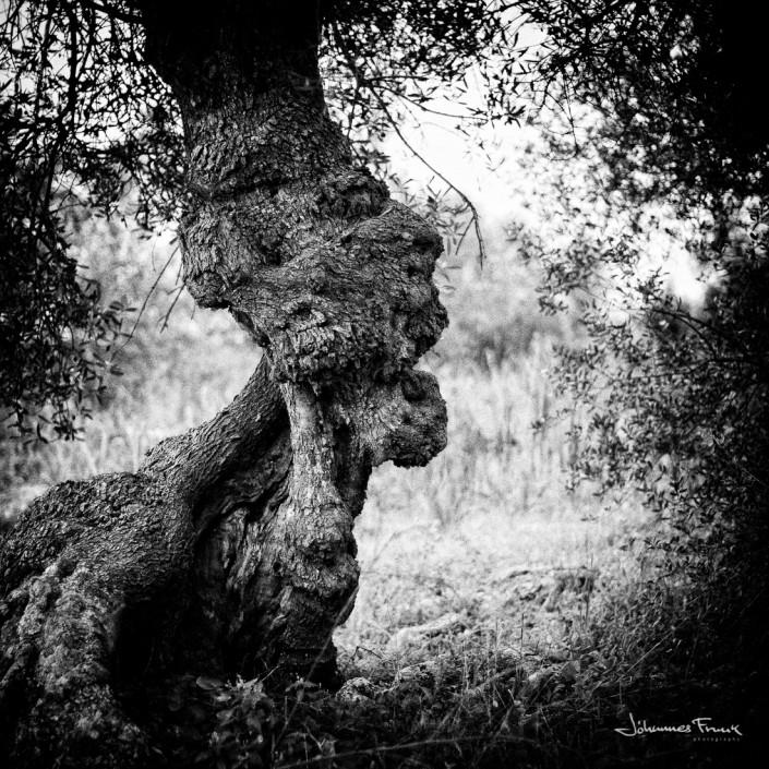 olive tree look like a professor johannes frank