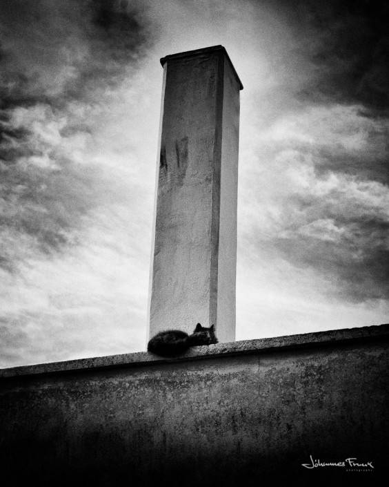 Cat and a Chimney Johannes Frank