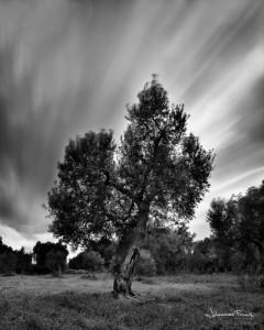 Olive tree Long Exposure Johannes Frank