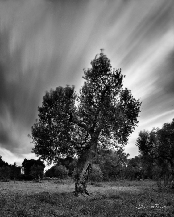 Olive tree Long Exposure Johannes Frank