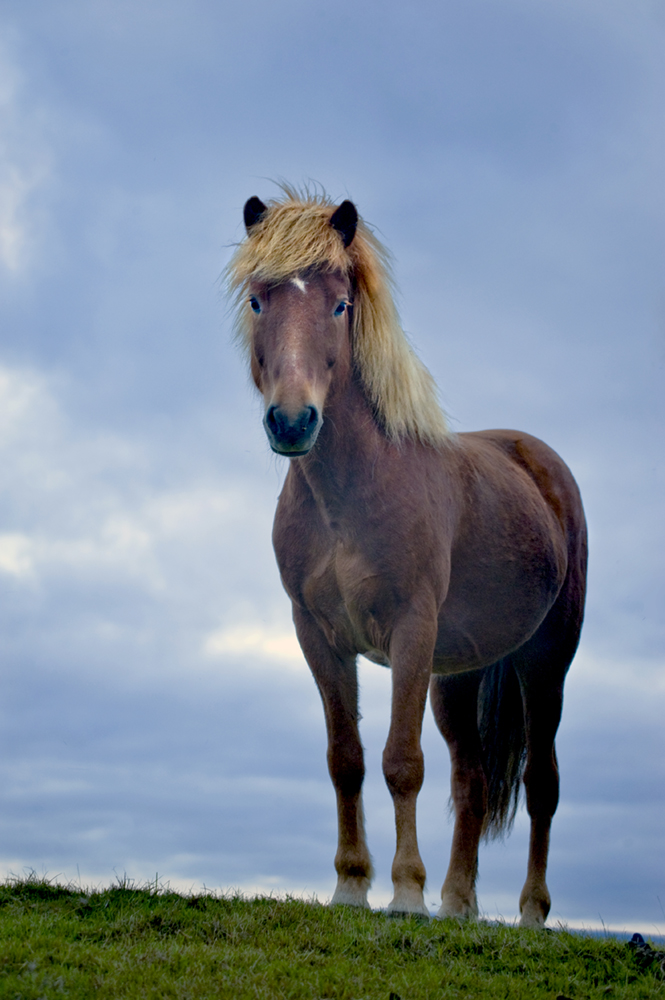 Horse in summer hair poses like a model