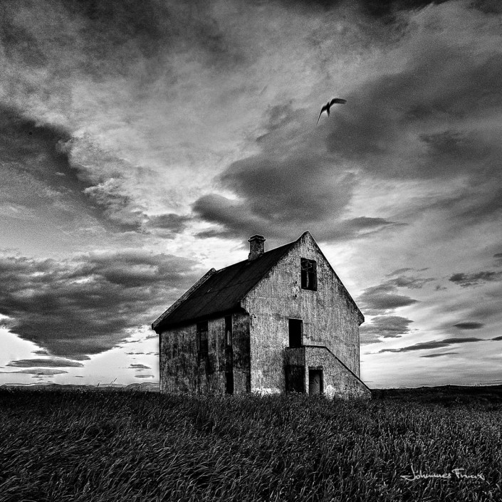 A free bird and abandoned house johannes frank