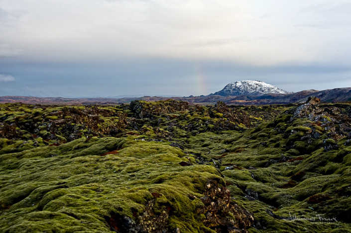 Moss covered Lava Johannes Frank