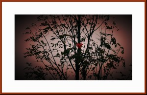 Red Leave in trees