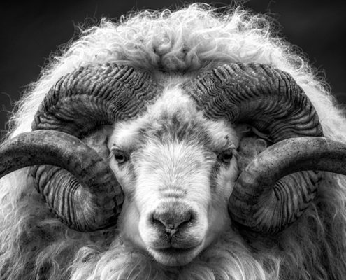 Photograph with RAM Horns