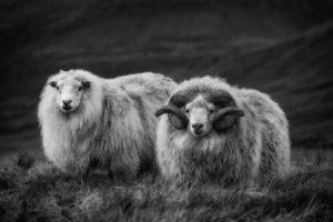 female and ram