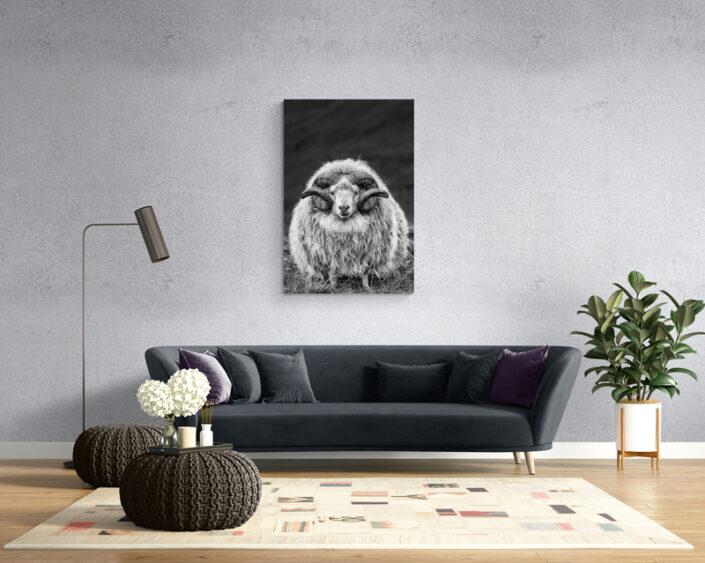 Johannes Frank Art Prints printsIcelandic RAM johannesfrankart.com